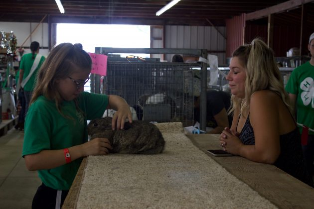 A girl practices showing a rabbit with her mom at a fair.