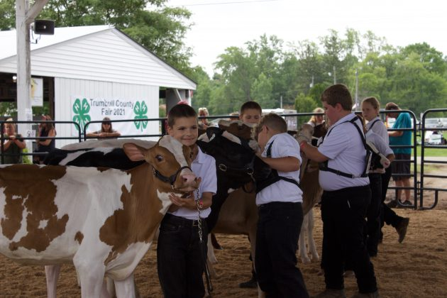 Kids showing dairy cows at a fair.