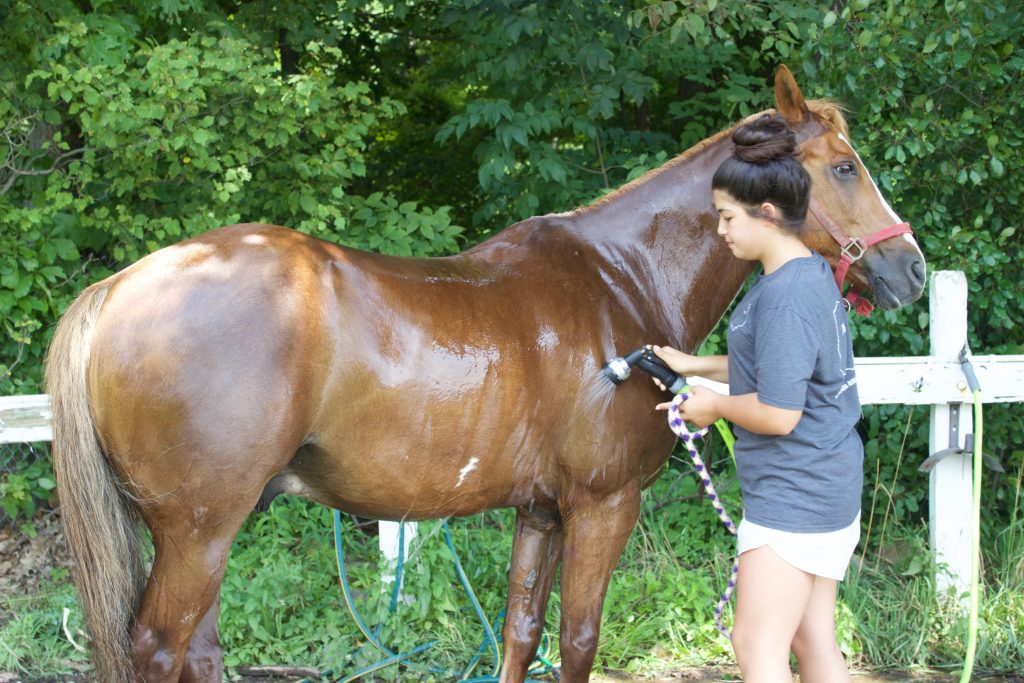 A girl washes a horse after a show at the fair.