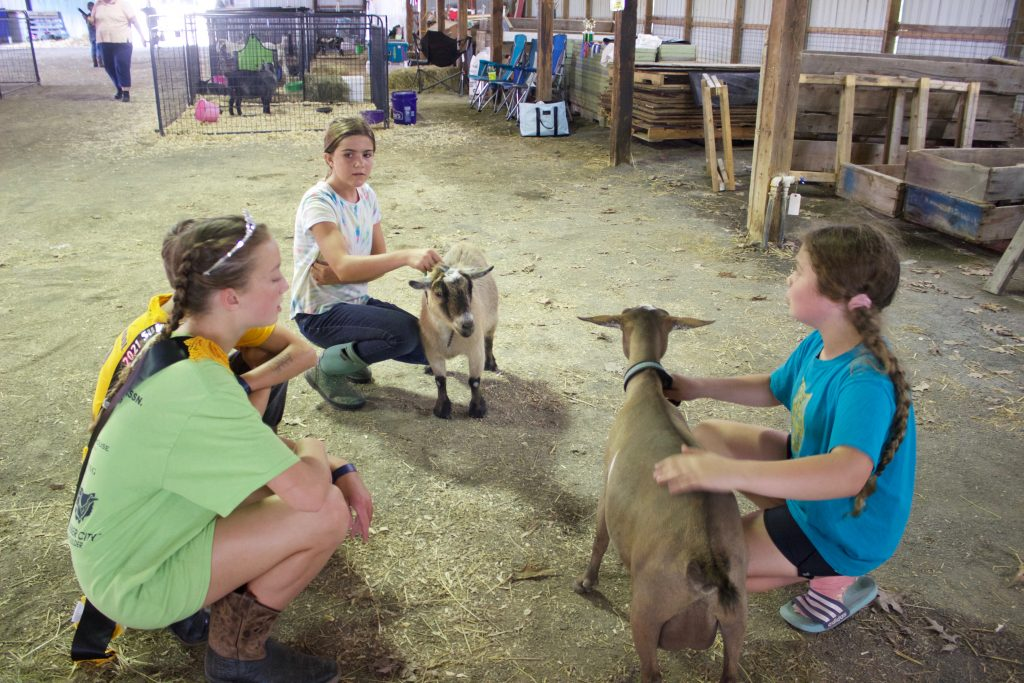Three girls and a boy crouch next to two goats in a barn at the fair while practicing for a show.