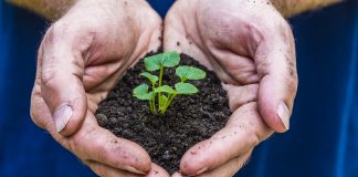A pair of hands hold soil and a small plant.